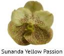 Orchideeen soorten105