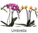 Orchideeen soorten109