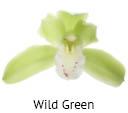 Orchideeen soorten13