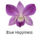 Orchideeen soorten14