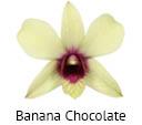 Orchideeen soorten16