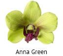 Orchideeen soorten18