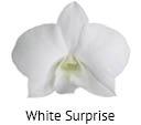 Orchideeen soorten22