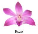 Orchideeen soorten25