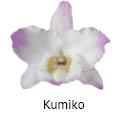 Orchideeen soorten29