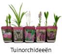 Orchideeen soorten41