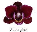 Orchideeen soorten48