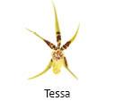 Orchideeen soorten5