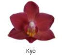 Orchideeen soorten50
