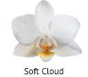 Orchideeen soorten53