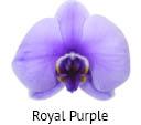Orchideeen soorten67