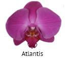 Orchideeen soorten78