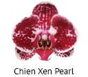 Orchideeen soorten81