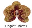 Orchideeen soorten83