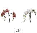 Orchideeen soorten87