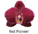 Orchideeen soorten89