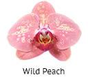 Orchideeen soorten93