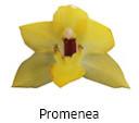 Orchideeen soorten96